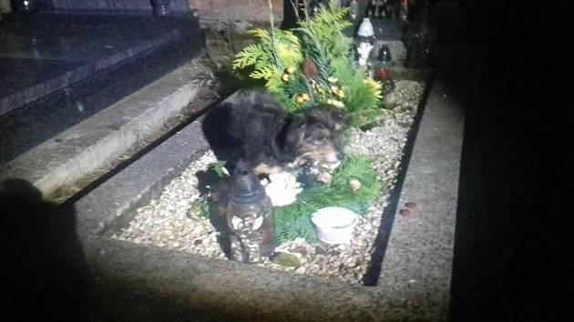 Pes nalezený na hřbitově