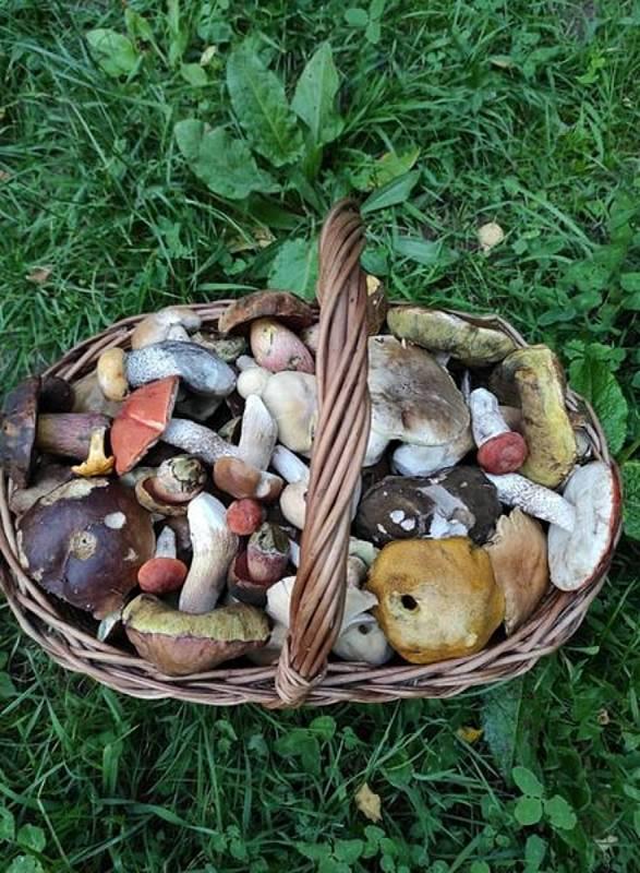 """Jiří Laštůvka Kudláček sbírá často houby, které ostatní označují jako """"prašivky"""". Třeba z mlženek připravuje skvělé utopence. Podívejte se do jeho košíku!"""