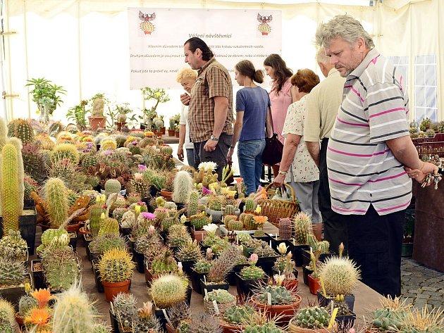 Tradiční výstava kaktusů na Resselově náměstí v Chrudimi.
