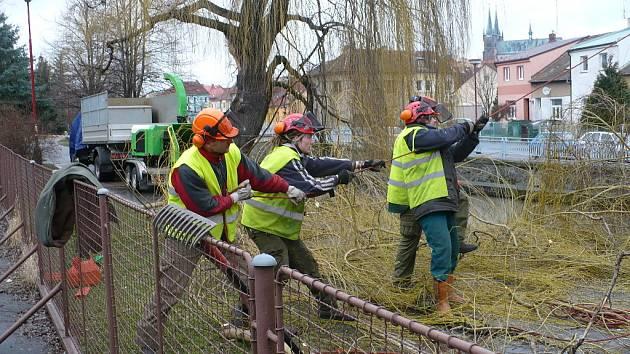 Prořezávka stromů na nábřeží Chrudimky už byla nutná kvůli bezpečnosti chodců.