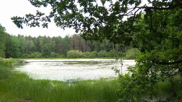 Nádherná zelená zákoutí najdeme například v okolí městysu Žumberk. Na snímku lesní rybník Malá Straka. Foto: Deník/Marek Nečina