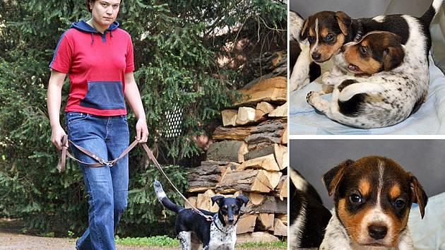 """Fenka """"Chudobka Anibob"""" je typická představitelka plemene českého strakatého psa."""