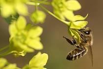 Teplé počasí probudilo takřka všechny příslušníky hmyzí říše. Při troše pozornosti objevíte ve slatiňanském parku desítky druhů.