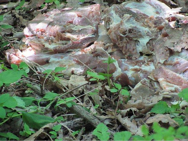 Zapáchající hromada kazícího se masa se povaluje v lese.