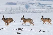 Pro zvířata není mnohdy snadné přežít zimu.