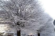Ladovská zima na Chrudimsku.