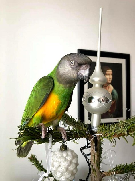 Hledá se papoušek Eddie, může být kdekoliv