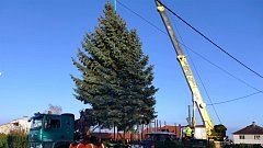 Vánoční strom přijel do Chrudimi z Ostřešan