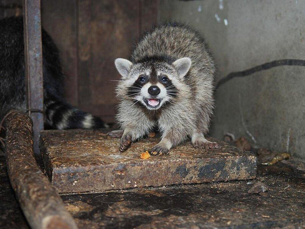 Při prohlídce soukromé zoologické zahrady Kamila Karely v Kostelci u Heřmanova Městece na Chrudimsku byly k vidění různé druhy zvířat.