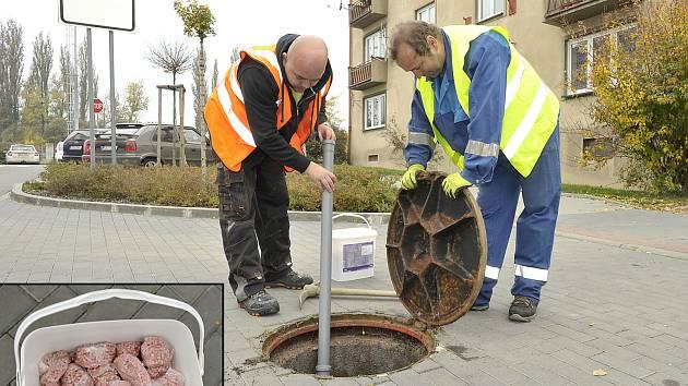 Několik sáčků s otrávenou nástrahou teď leží také v kanalizaci pod povrchem chodníku ve Fibichově ulici.