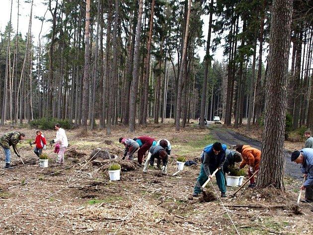 Na obnově lesa se podíleli dospělí i děti