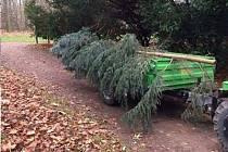 Pokácený strom v zámeckém parku