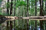 Nové tůně v chrudimských lesích.