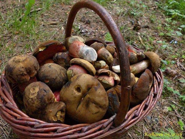 Plný koš letošních hub