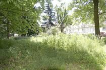 Džungle trávy v Husově ulici