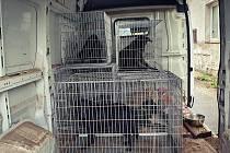 Bylo to drama: Týraní psi z Chrasti už jsou v bezpečí útulku