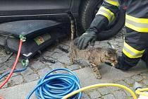 Kočka uvázla pod autem