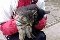 Zachráněná koťata z Rosic