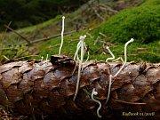 V holých lednových lesích rostou desítky druhů hub.