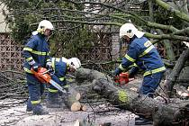 Hasiči odklízeli spadlý památný strom v Sobětuchách.