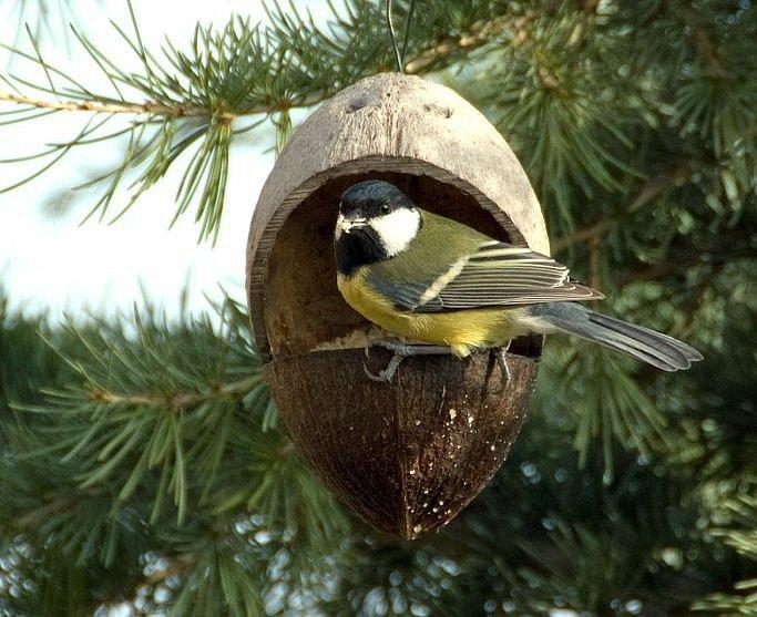 Správnou potravu v krmítku ptáci ocení.