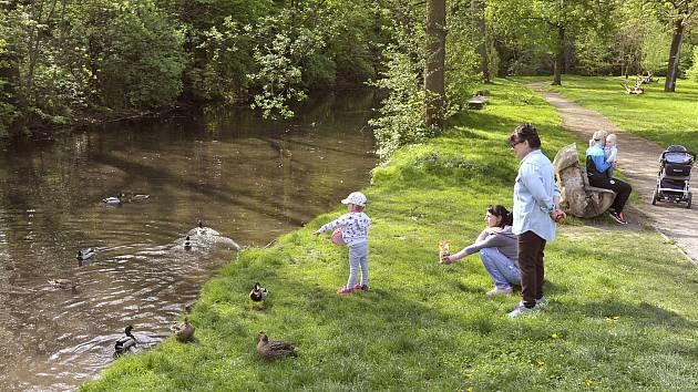 Krmení divokých kachen na říčním náhonu v parku Střelnice je oblíbenou kratochvílí malých Chrudimáků.
