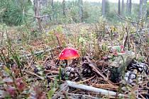 Vyfoťte své houbařské úlovky.