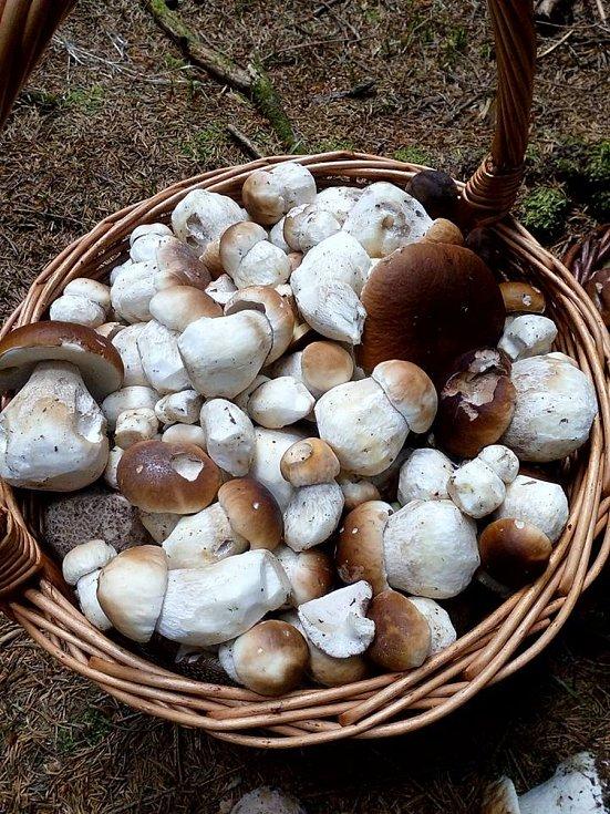 Dílčí výsledky houbařských výprav Jiřího Laštůvky z uplynulého týdne.