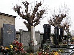 V Hrochově Týnci uvažují o pokácení sedmašedesáti stromů ze hřbitova.