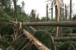Ve Smrkovém Týnci vichřice devastovala lesní porost a donášela střechy domů.