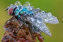 Pohled do říše hmyzu může být opravdu zajímavý.