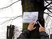 Prosečská radnice byla v březnu 2007 terčem kritiky za ořezání lip na místním hřbitově. Do sporu, který nyní řeší Česká inspekce životního prostředí, vstoupil i senátor Martin Mejstřík.