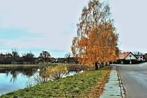 Návesní rybník v Zaječicích
