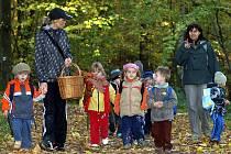 Hurá do lesa! Na mnoha místech na Chrudimsku už Městské lesy zrušili zákaz vstupu do lesů.
