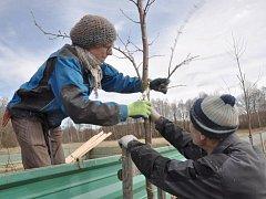 """Krounští chtějí o staré odrůdy ovocných stromů pečovat jako správní hospodáři, a tak si ke spolupráci pozvali odborníka Dominika Grohmanna, který má přízvisko """"potulný sadař"""". Ten společně s pracovníky údržby krounského obecního úřadu provedl takzvaný v"""