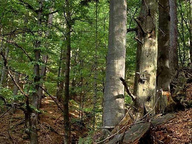 Chráněná krajinná oblast Železné hory.
