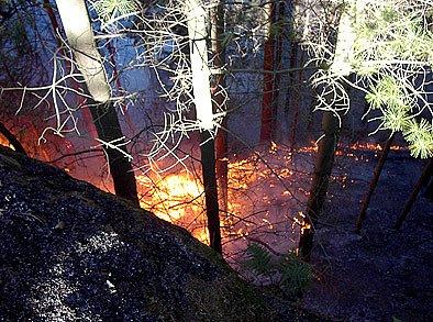 Požár lesa v Boru u Skutče.