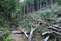 Kalamita v Lovětínské rokli z června 2007.