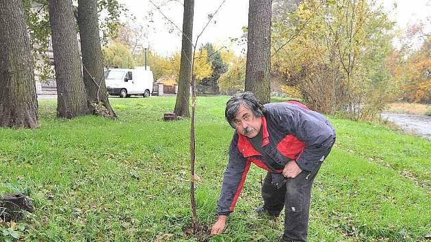 Stromky ce škdovádské Olšince jsou poškozené a pravděpodobně nepřežijí do jara.