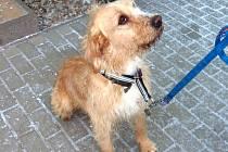 Ačkoliv není čistokrevného původu, je Brok přátelský a čistotný pes, který čeká na pána.