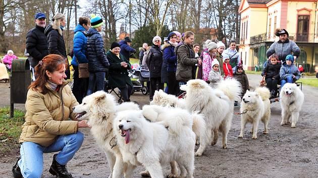 Cestami zámeckého parku kroužila psí spřežení