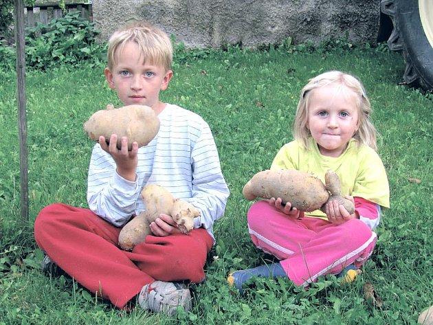 Sourozenci Martin a Eliška si z pole odnesli největší a nejkrásnější exempláře . Největší brambora váží přesně 1, 4 kilogramu, takže stačí pro čtyřčlennou rodinu k obědu.