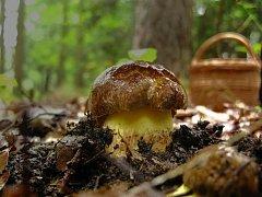 Co se dalo koncem srpna najít v lese...