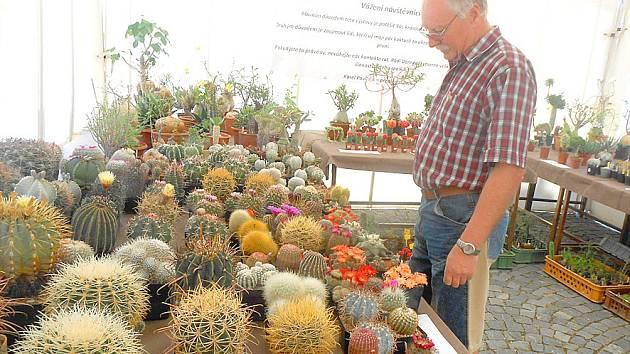 Výstava kaktusů na Resselově náměstí