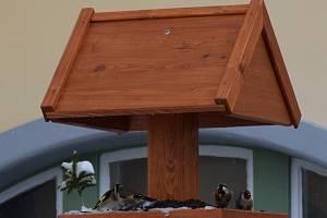 V Hamzově parku žije čtyřicet druhů ptáků