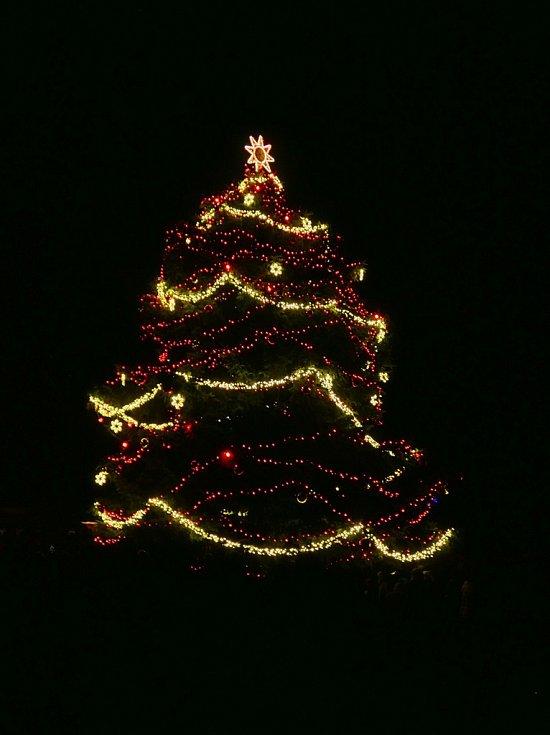 Vánoční strom v Seči