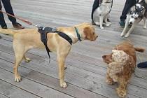 Voříšci i čistokrevní psi. Milováni jsou všichni stejně.