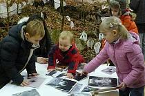 Poutavou výstavu o lese můžete v Regionálním muzeu navštívit až do 20. května.