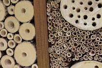 Hmyzí hotel se může stát domovem pro řadu druhů, například berušky nebo včely