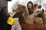 Zdravici k úspěšnému roku 2010 čtenářům Deníku posílají obyvatelé soukromé zoo Kamila Karely v Kostelci u Heřmanova Městce.